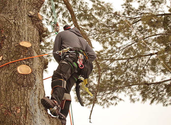 A&M Tree Services LLC employee trimming a tree