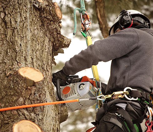 A&M Tree Services LLC employee cutting a tree down