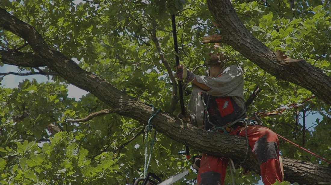 A&M Tree Services LLC: Tree cabling and bracing in Fairfield, Cincinnati and Loveland
