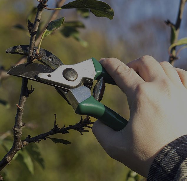 A&M Tree Services LLC: Tree pruning in Fairfield, Cincinnati and Loveland